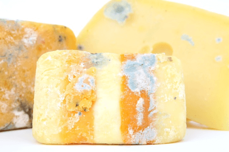 Pink mould and Red Mold On Cheese