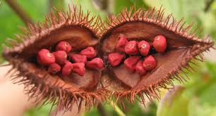 What Is Annatto? Annatto In Cheese Making