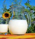 milk cheese - making cheese from milk