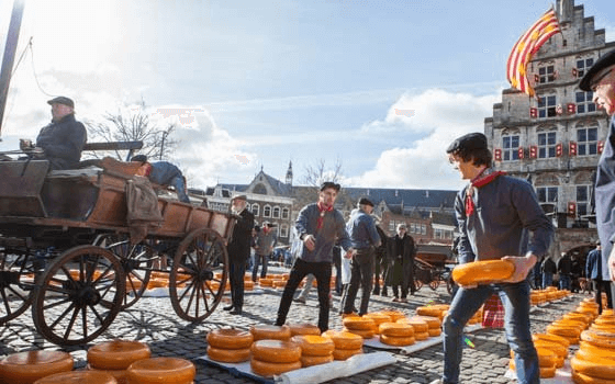 Gouda Cheese Markets South Holland