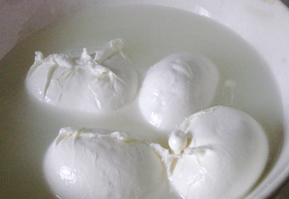 learn to make fresh mozzarella from curds at home